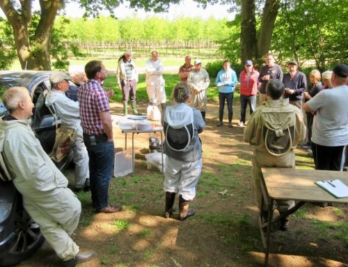 Apiary Record 4th August 2019